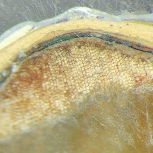 The Role of Paint Microscopy in Historic Paint Analysis