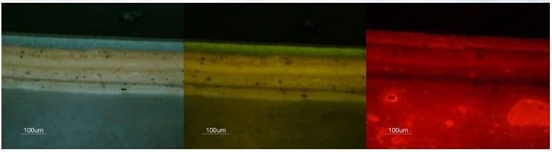 Fluorescent Microscopy paint analysis technique